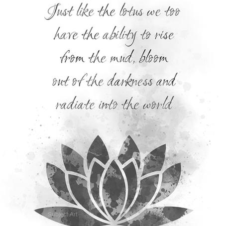 My Lotus Flower Story