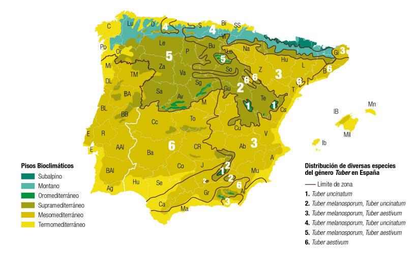 distribución-trufa-españa