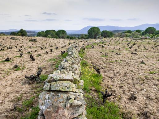 La Sierra de Gredos y su garnacha: La Mira y Las Violetas 2018