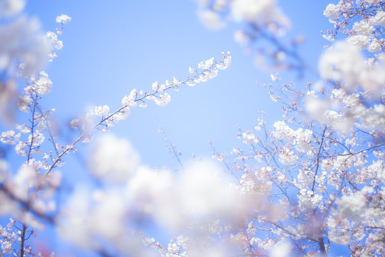 TSU88_tabidachi_TP_V.jpg