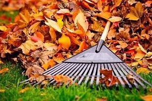 6-leaf-removal-hacks-post.jpg