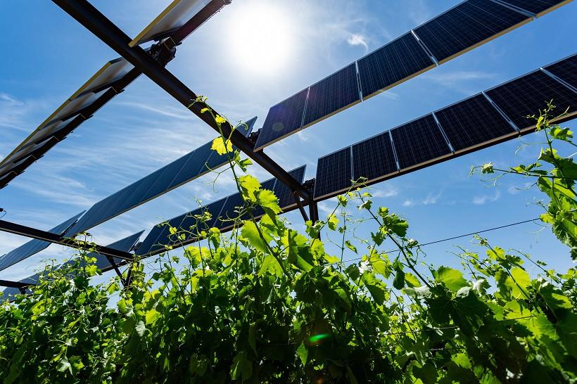 Agrivoltaïque en viticulture. Ombrage dynamique. Sun'Agri. Photovoltaïque PV agriculture panneaux solaires synergie cohabitation tracker vignes