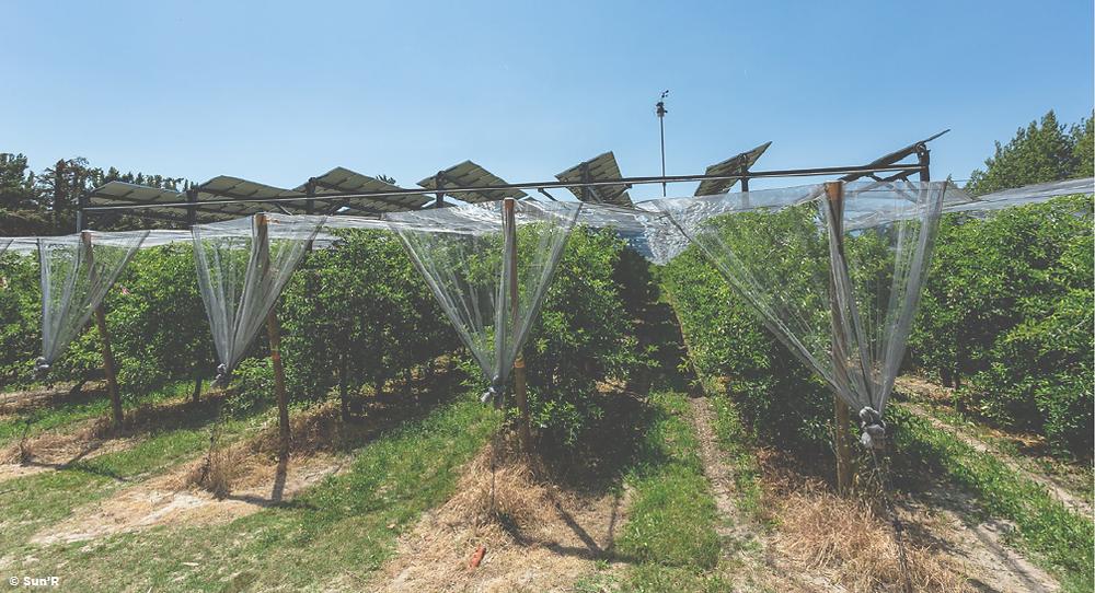 Agrivoltaïque en arboriculture. Ombrage dynamique. Sun'R. Photovoltaïque PV agriculture panneaux solaires synergie cohabitation tracker