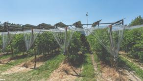 L'Énergie photovoltaïque dans le monde agricole