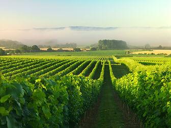 Nyetimber vineyard 2 mist.jpeg