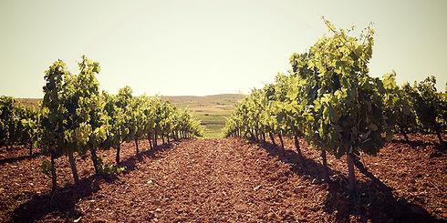 spain-wine-region.jpg