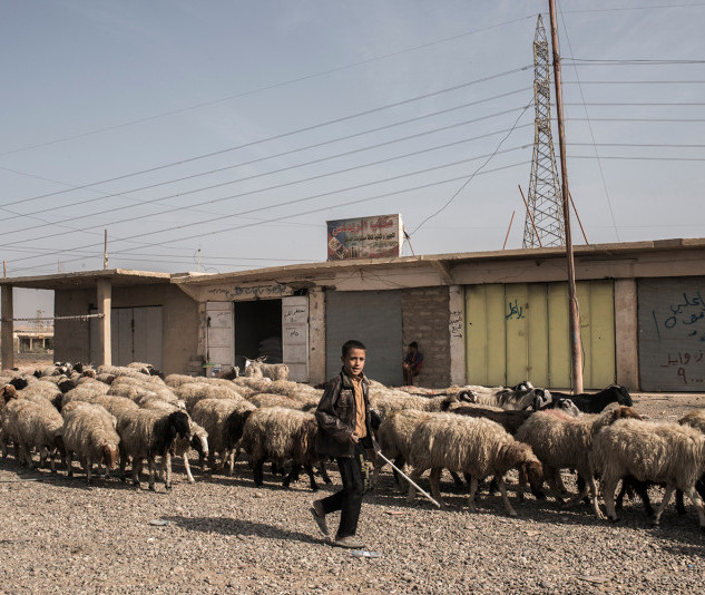 iraq-assyrian-boy-sheep-nineveh-plains-G