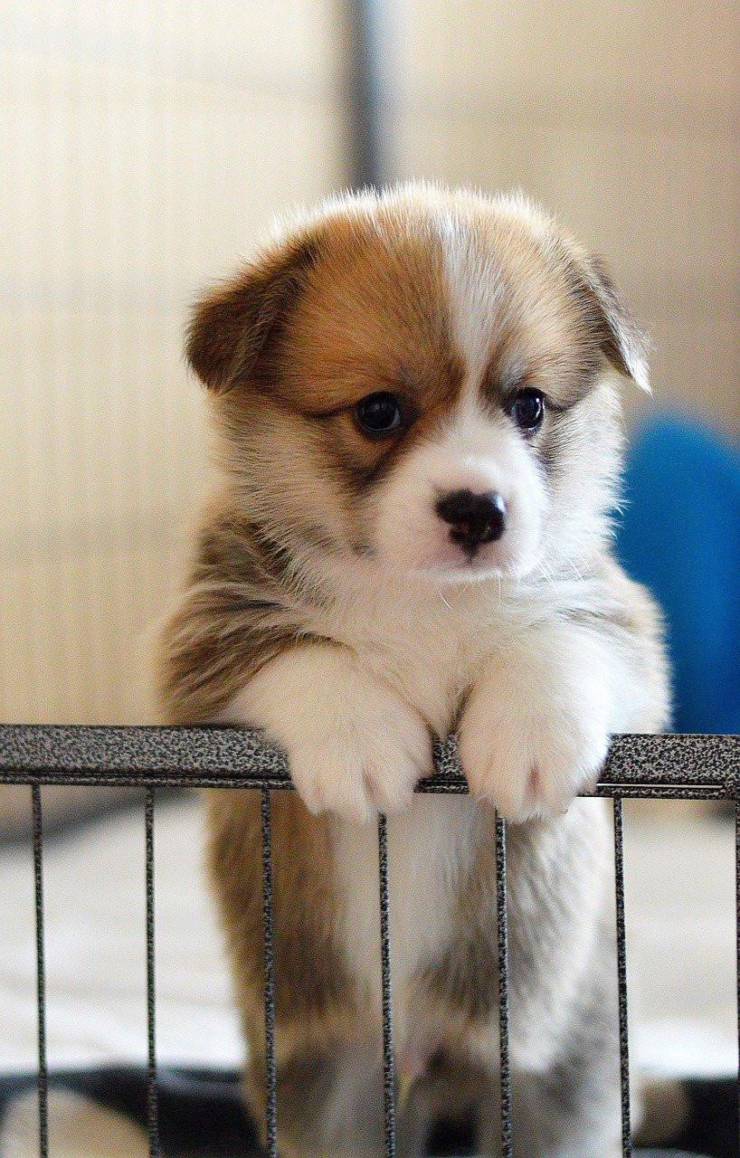 Puppy in a puppy pen