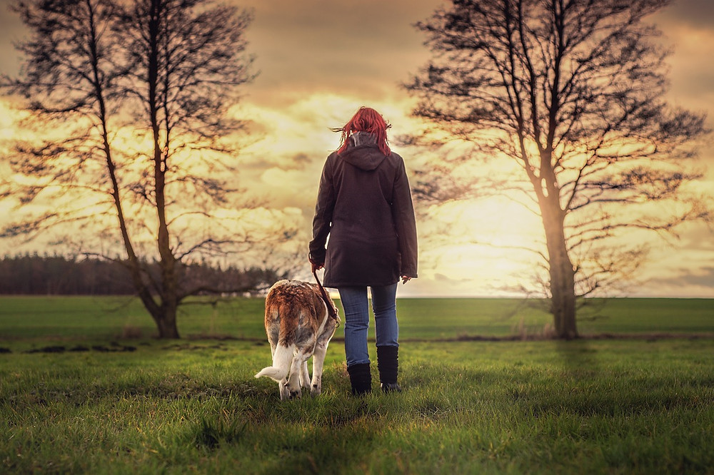 Lady walking dog on lead in field