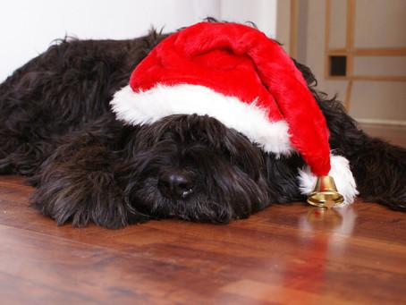 8 ways to keep Christmas safe for your dog