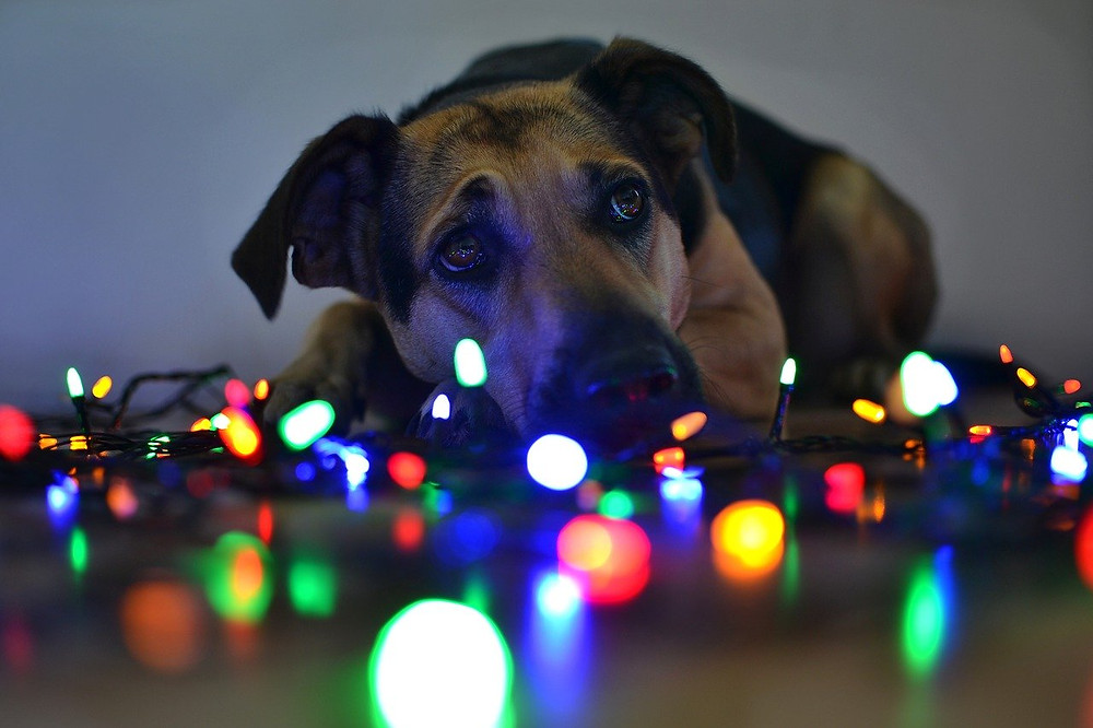 Dog laying on floor next to multi-coloured light string