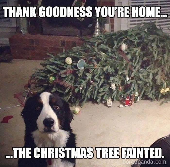 Dog sat next to fallen Christmas tree at home