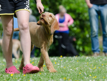 New puppy training and dog training services, Henley-on-Thames
