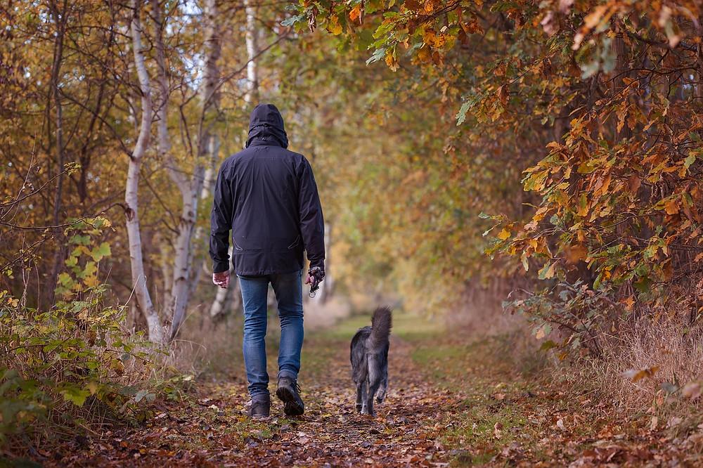 Man walking dog in autumnal wood