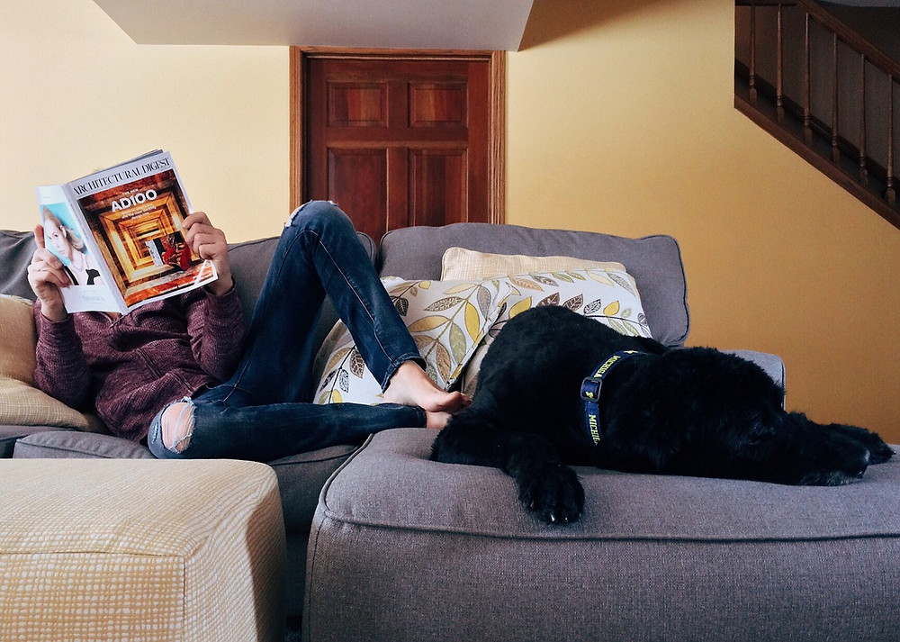 Black Labrador resting on sofa whilst owner reads a magazine