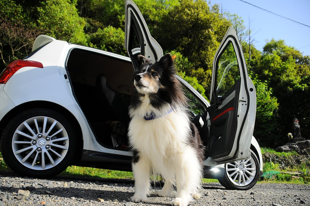 Dog sat by car with open doors