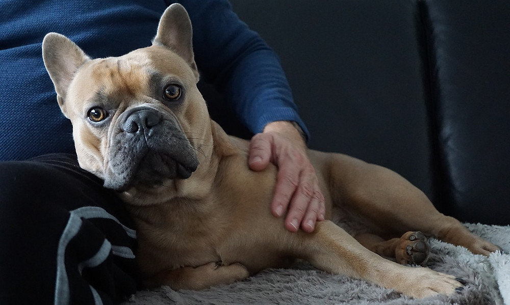 Dog leaning into man's leg on sofa with man's hand resting on dog's shoulder