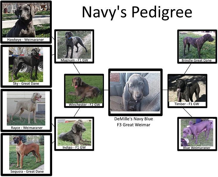 NavyPed.jpg
