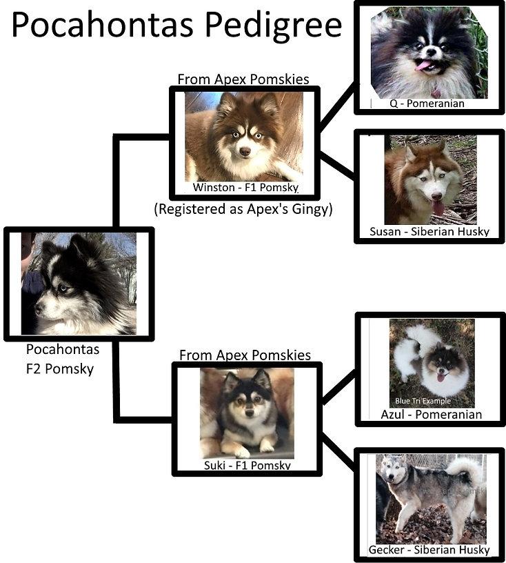 PocahontasPed.jpg