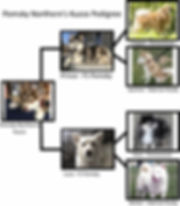 KuzcoPedigree.jpg