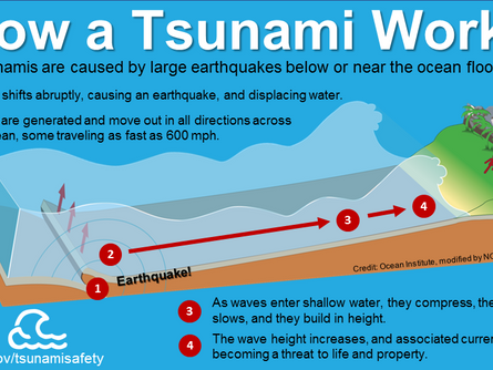 Tsunami? What's that?
