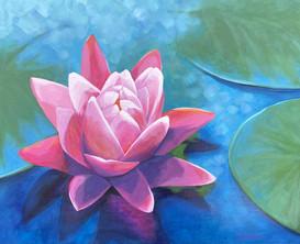 """""""Lotus Transformation"""""""
