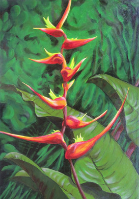 """#1 of""""Tropical Trio"""" (Heliconias varieties--Gingers)"""