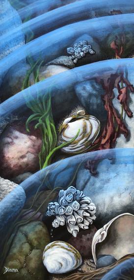 """""""Tidal Treasures"""""""