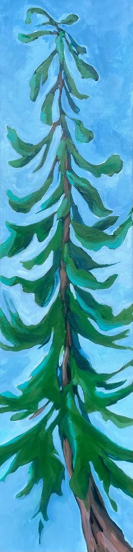 """""""Tree Breeze"""""""