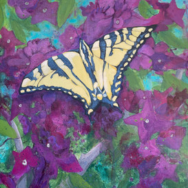 """""""Butterfly on Hibiscus"""""""