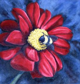 """""""Embrace"""" (Bee on Dahlia)"""