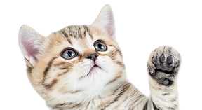 Kitten Veterinary Care in Canton, Michigan