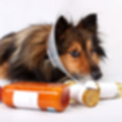 Veterinary Pharmacy Dog