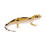 Reptile Veterinary Care for Geckos