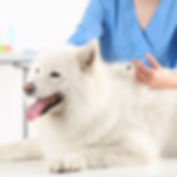 Veterinary Vaccinations Dog