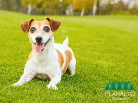 Grama boa para cachorro - 3 dicas simples para salvar o gramado