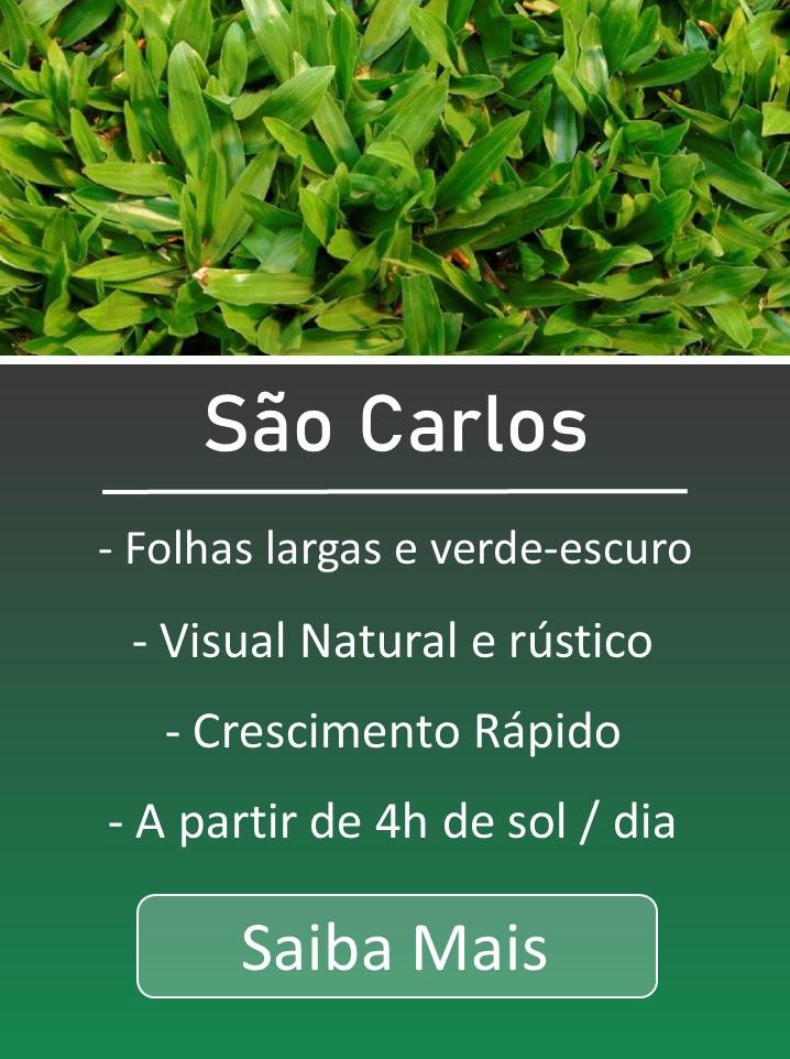 Grama catarina, grama são Carlos, Grama sempre-verde, grama sempre verde