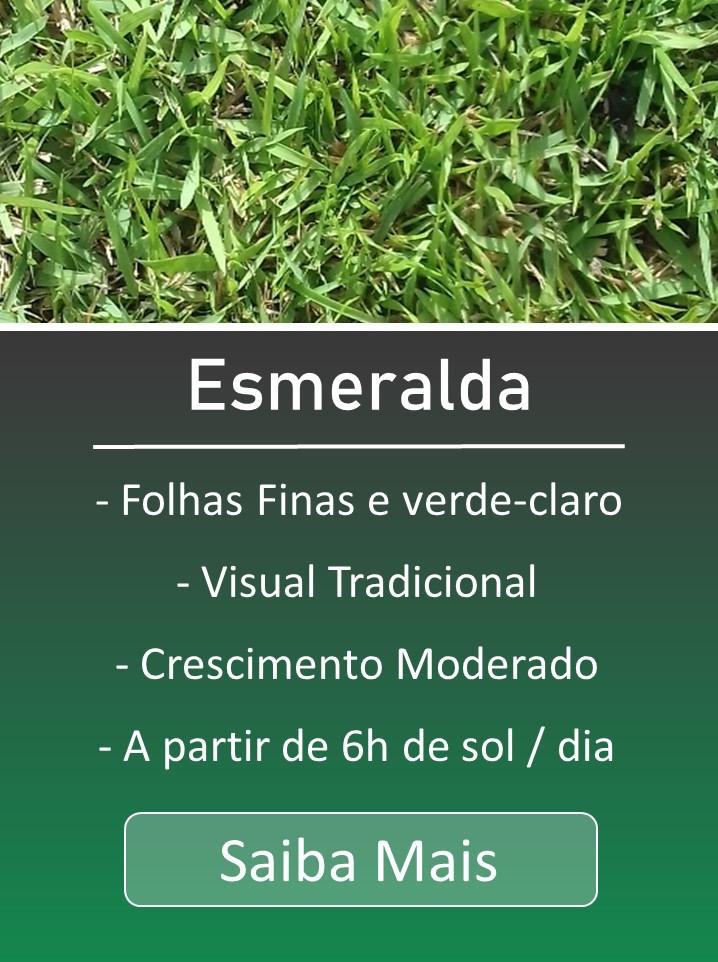 Grama Esmeralda, Grama Esmeralda em Porto Alegre, Grama Esmeralda cuidados