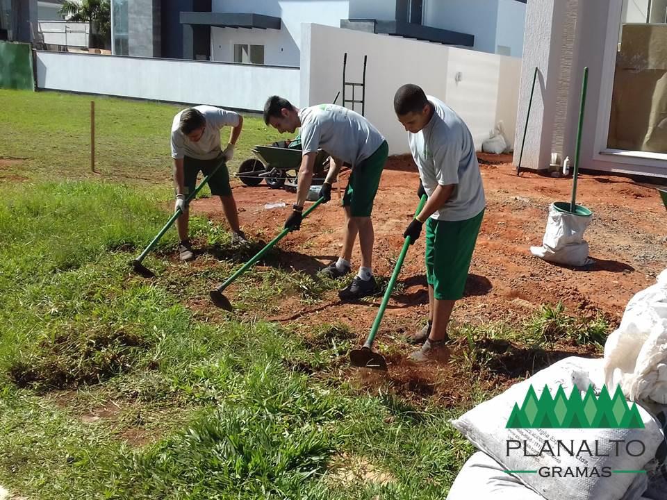 Remoção de ervas daninhas para plantar grama - Planalto Gramas