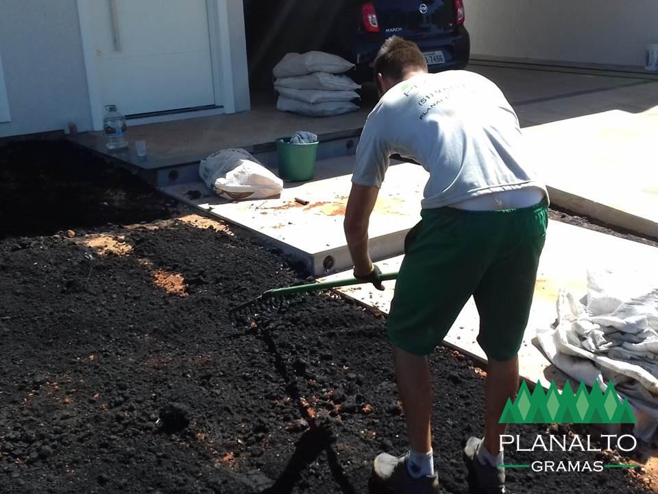 Plantar grama em placas, leivas ou tapetes - Planalto Gramas