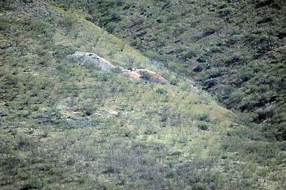 Prospect dumps on the Golden Era Mining Company Property
