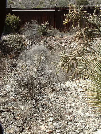 The overgrown Congdon Shaft