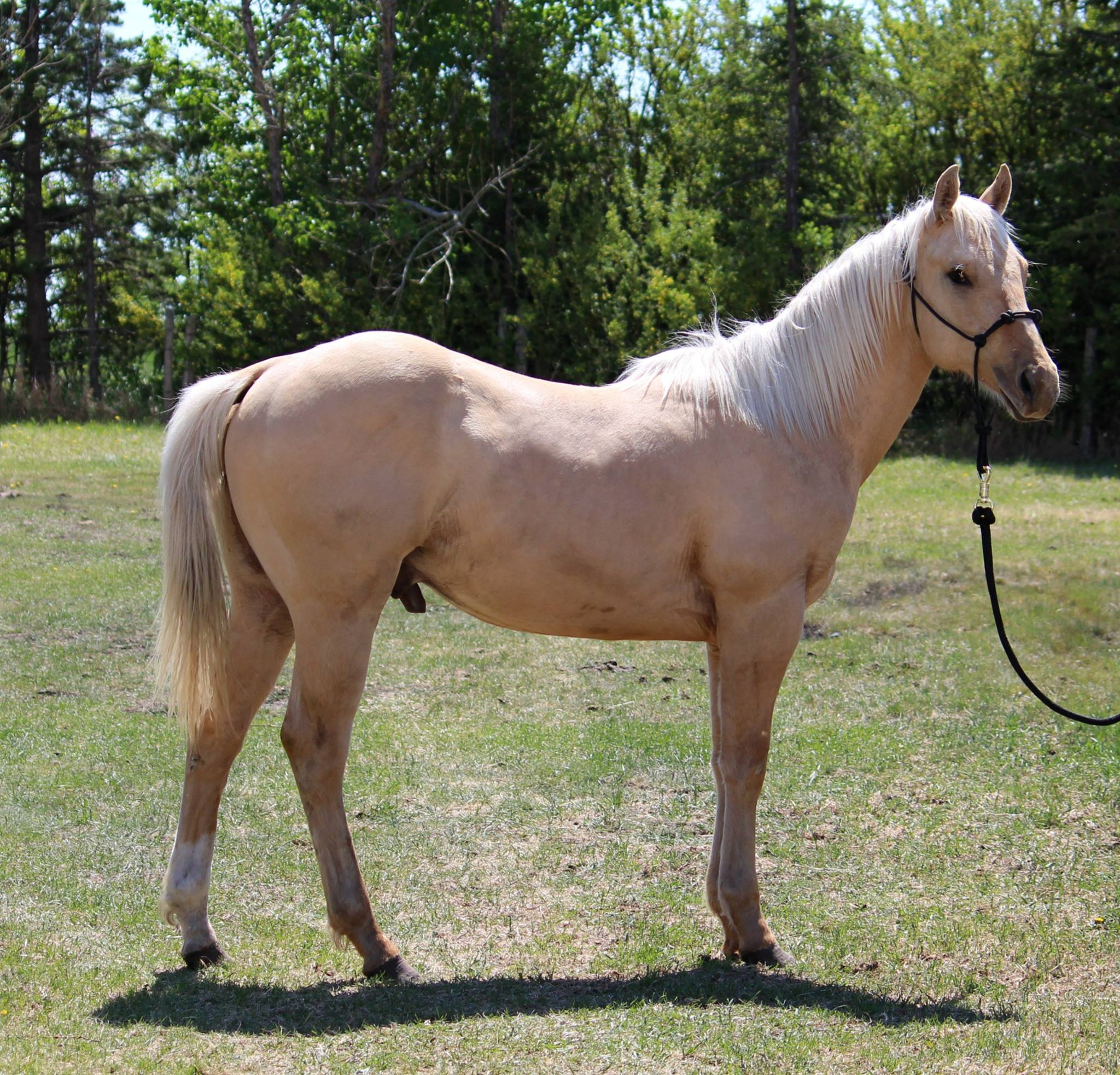 Foal, Jagger