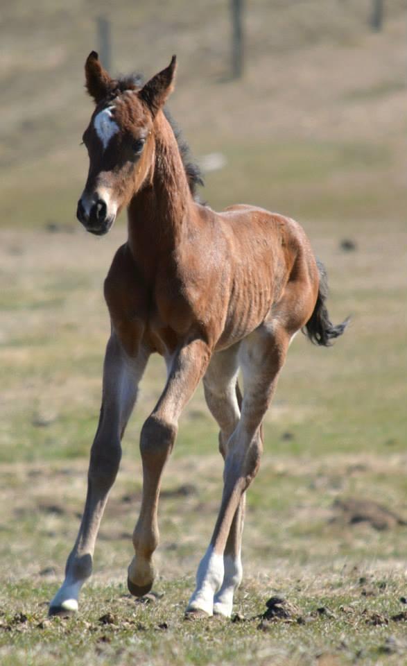 Foal, Jacd By Roulette