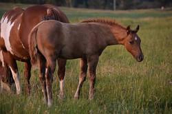 Foal, Zane
