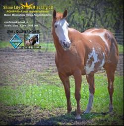 Foal, Shine Lily Shine