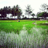 Into the #ricefields #java #surftrip