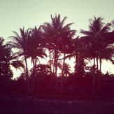 Sunset over coconut trees.jpg