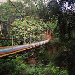 The lost bridge inside the Java jungle.j