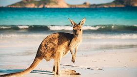 kangaroo-island-australia-1512549504-785X440.jpeg